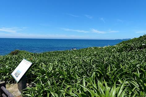 芦屋のはまゆう海岸♪