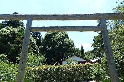木の鳥居♪