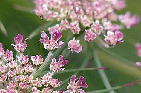 薄紫色の小さな花が♪
