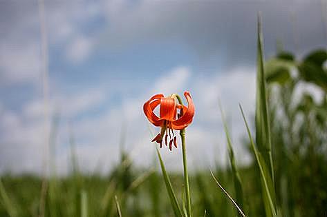 可憐な夏の花♪