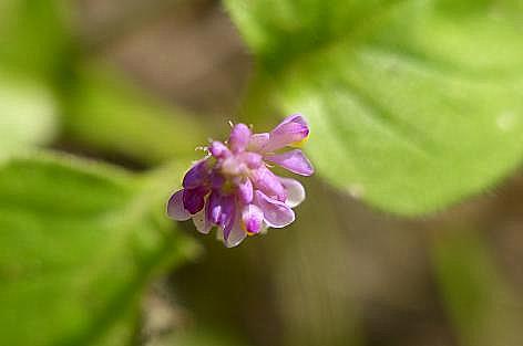 とっても小さな花♪