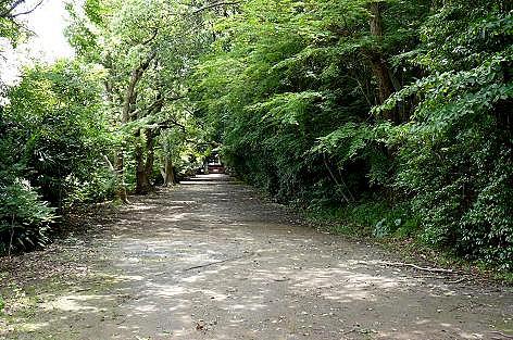 森のような参道♪