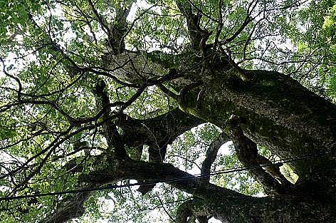 大きな木♪
