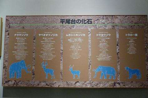 動物の化石♪