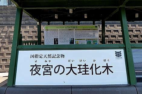 国指定天然記念物♪