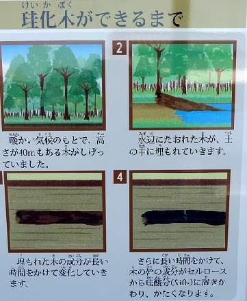 珪化木が出来るまで♪