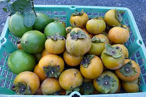 柿とレモン♪