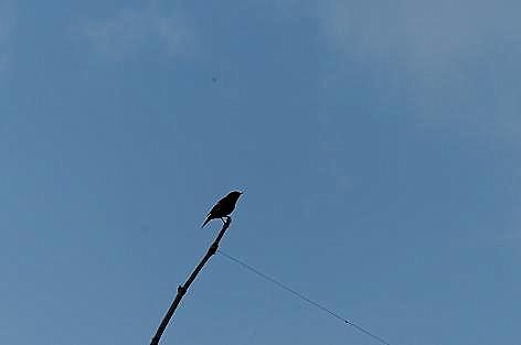 小鳥が飛んだ♪