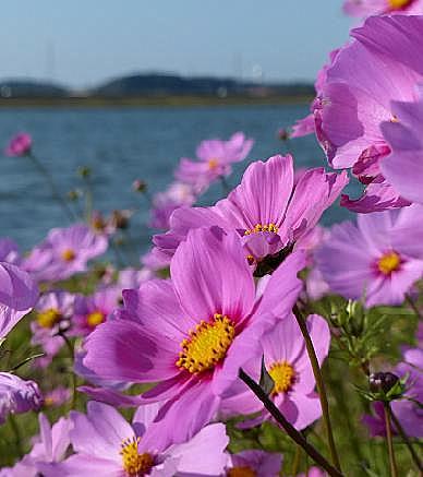 遠賀川の堤防♪