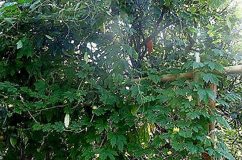 梨の木に♪