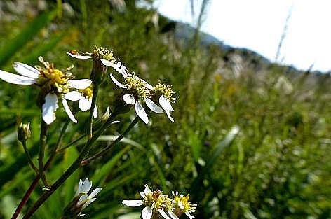 草原の野菊♪