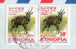 エチオピアF201112