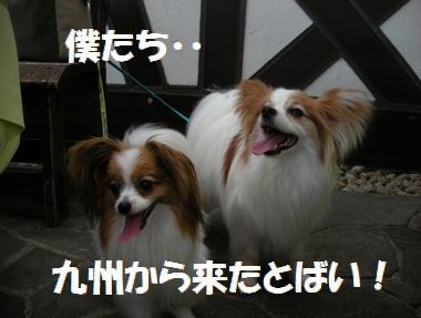 005_20100718172240.jpg
