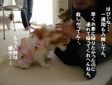 064_20100720125111.jpg