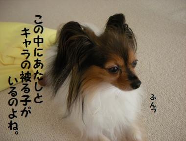 137_20100720125110.jpg