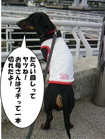 7_20110527015731.jpg