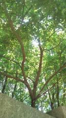 スズメを撮ったら逃げた後の木