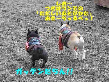 013_20140130092930ee4.jpg