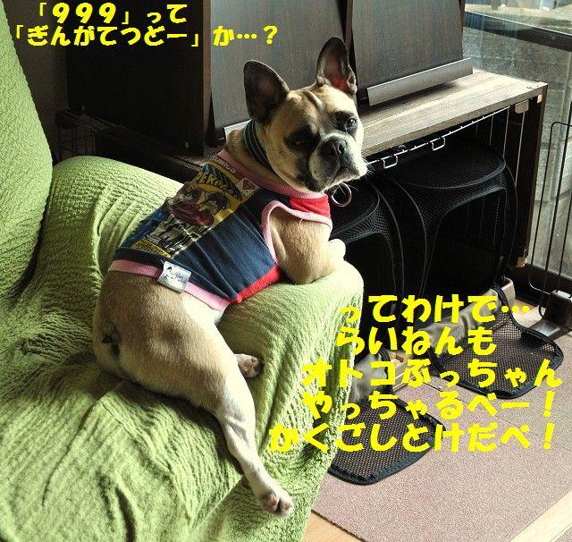 108_20131230202039c94.jpg