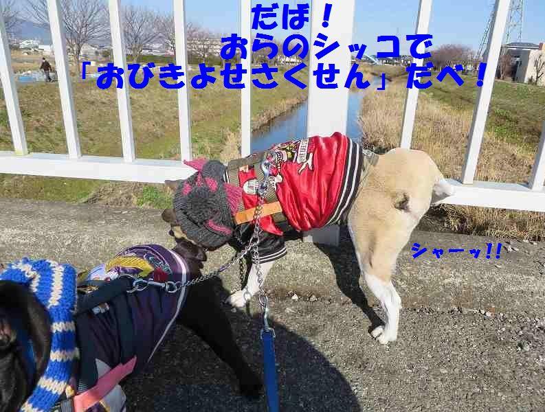 111_201401151421491aa.jpg