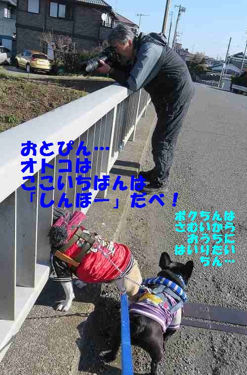 123_20140115142357cc9.jpg