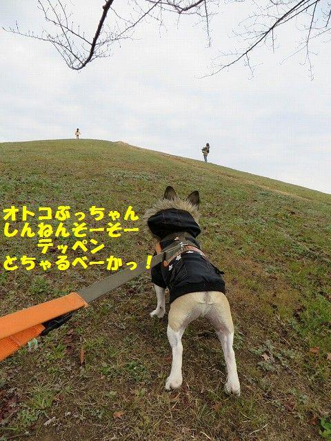 IMG_1596.jpg