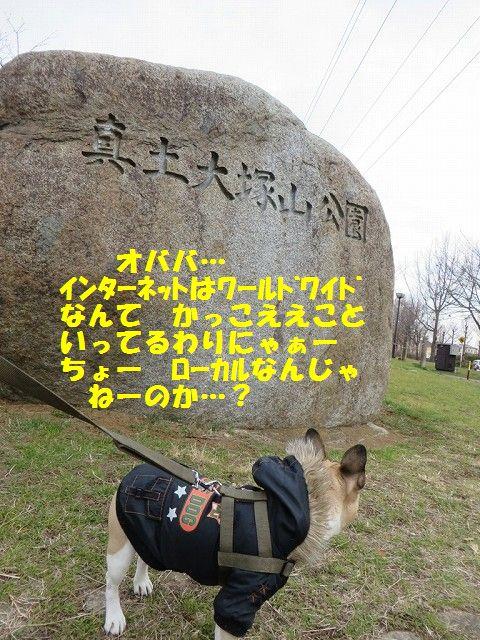 IMG_3033.jpg