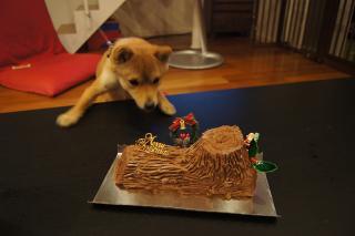チョコレートケーキ!