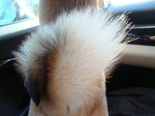 きれいな尻尾
