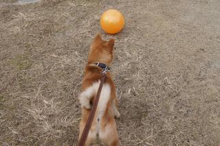 ボールみっけ