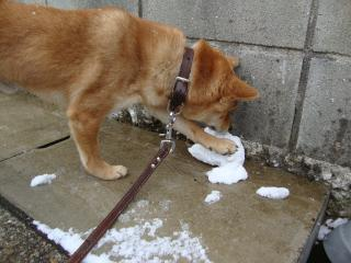 雪食べる①