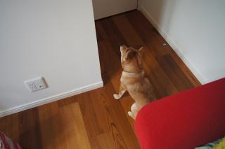 忠犬ハル②