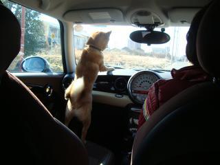 お出掛けドライブ