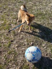 久々サッカー