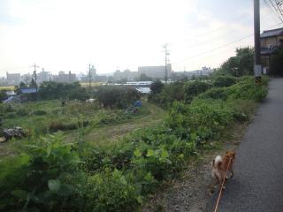 ポカポカ散歩①