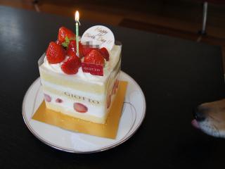 ケーキ狙い