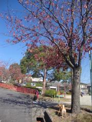 穏やか秋日