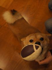 ラグビー犬①