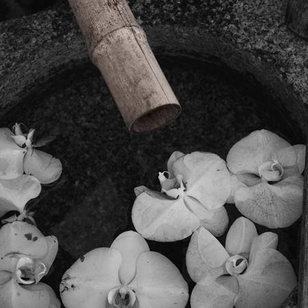 14・水鉢の蘭