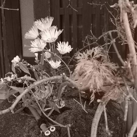 20・生け花