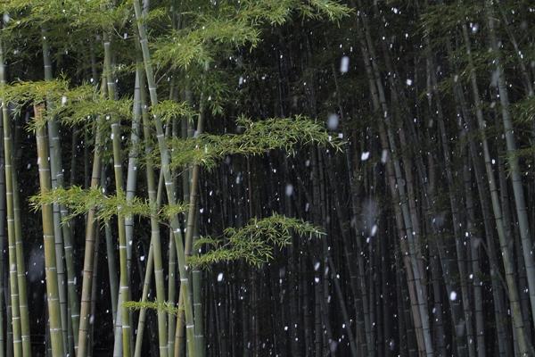 13・雪が降ってきた