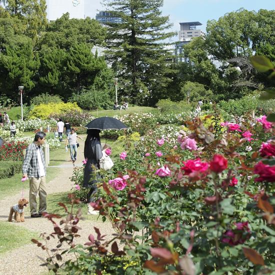 05・バラ公園