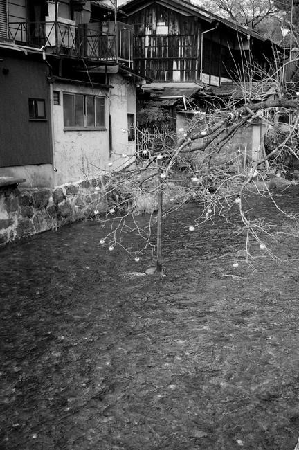 14・川の上の柿:東山区五軒町