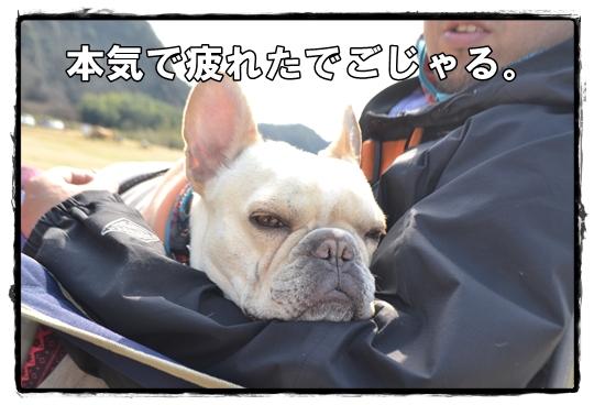 犬山キャン16