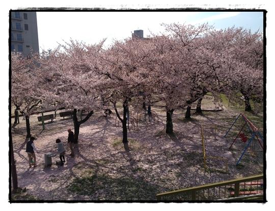 お花見いん公園