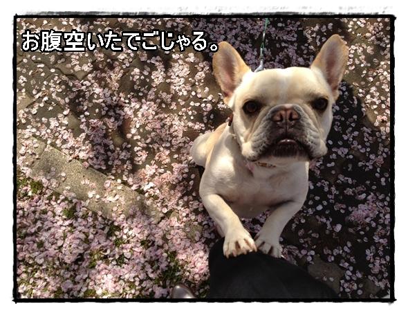 桜おねだり