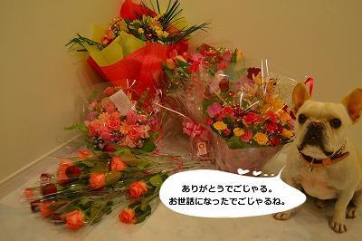440_convert_20110325212343.jpg