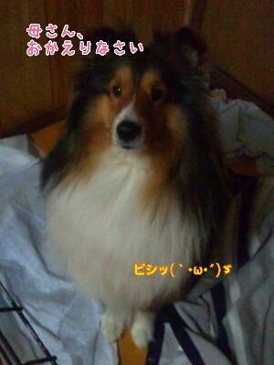 fc2_2014-01-10_21-11-27-407.jpg