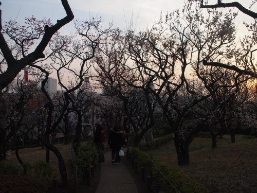 羽根木公園の梅
