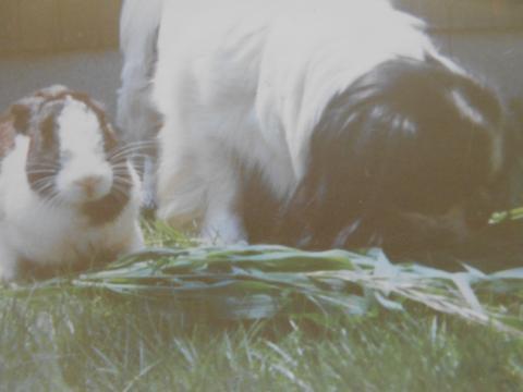 クロとウサギ